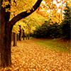 tatsutahime: (Ontario Fall)