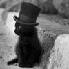 bamfingcats: (Fluffy)