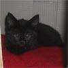 bamfingcats: (Squirt)