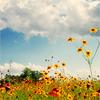 klb: (Flowers)