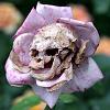 marshalsea: c'est moi (|005| skull rose)