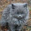 bamfingcats: (mayhem)