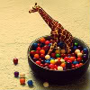 willowrose: (giraffe in candy)
