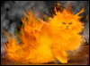 firecat: cat appears to be made of flames (firecat2)