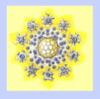 sporangia: (Yellow and Blue Star)