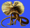 sporangia: (lizard)