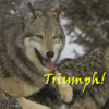 "anthimeria: A happy wolf pouncing on a packmate, reads ""Triumph!"" (Triumph!)"