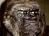 moderate_excess: (Gorilla)
