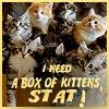 rahirah: (kittens)