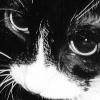 maskofsmiles: My cat Sylvia (Default)