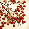 layangabi: (blossoms)
