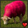 pink_sheep: (mindcrack, pink Sheep)