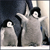 wenchpixie: (stock baby penguin yay wings)