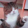 empanadas: (Maru ♦ high five?)