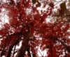 burningtreepress: (pic#574589)