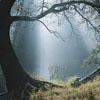 snowbryneich: (Sun through the trees)