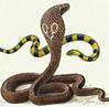 snake_elena: (snake)