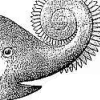 helicoprion: (MOST ACCURATE RECONSTRUCTION)