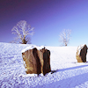 lizwithhat: photo of two avebury stones in the snow (avebury winter)