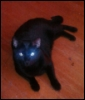 jenwilly: My cat, Kage (Basement Cat)