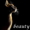 "zlabya: profile of a beautiful brown cat  haloed in light against a dark background, with the word ""beauty"" in italics (BeautyCat)"