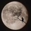 nephir: Cat in the Moon (Moon)