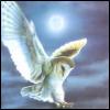 jennythereader: (Flying Owl w/Full Moon)
