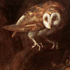 nightdog_barks: (Bird Barn Owl)
