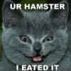 blackmare: (hamster kitty)