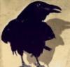 blackmare: (crow)