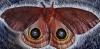 blackmare: (moth)