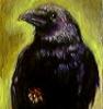 blackmare: (corvid)