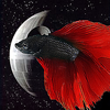 darthbetta: a red and black betta fish in front of the death star (Default)