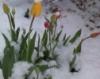 trayellis: flowers in snow (flowers in snow)