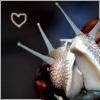 xenologer: (snail cuddle)