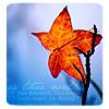 woldy: (Leaf)