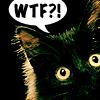 lunadelcorvo: (W T F? Kitten)