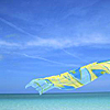 spatz: (beach scarf)