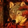 lunadelcorvo: (Autumn Wolf)