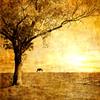lunadelcorvo: (Autumn Golden)