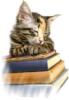 kitty_writer: (defeault)