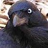 azhure: (Raven)