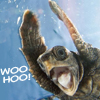 rivers_bend: (mood: woo hoo)