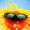veritas_poet: (Sunflower - sunglasses)