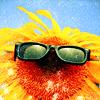 veritas_poet: (Sunflower - sunglasses)
