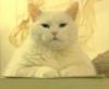 darandkerry: (Cat - default)