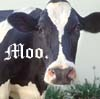 jewelsong: (moo)
