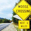 fenella: (moose crossing)
