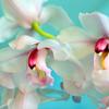 nekare: (gardenias)