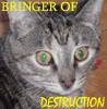 tripathy: (Destruction)